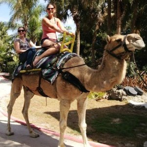 Tanner Camel